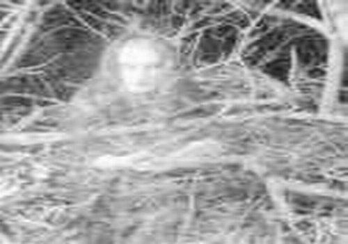 Обыкновенно ближе к трем часам ночи эта дама изволит располагаться непосредственно на ветвях одного из самых старых и красивейших парковых деревьев... Во всяком случае, так утверждаеит музейная охрана. А она, в свою очередь, регулярно лицезреет лик неугомонной мадам в записях камеры наружного наблюдения...