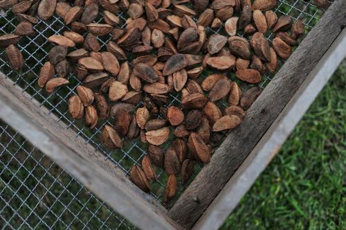 Пожалуй, самым вкусным продуктом из нашего списка является бразильский орех. Он помогает ускорить метаболизм путём преобразования базового гормона щитовидной железы в T3 (активную форму гормона щитовидной железы). Бразильский орех также помогает бороться с целлюлитом и укрепляет иммунную систему.