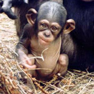 Знакомьтесь, это Синдер, что в переводе означает «Зола»… Золушка, значит…Служители зоопарка приняли на свет здоровую девочку 9 августа 1994 года  с большим удивлением…