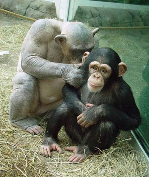 Со временем, говорят зоологи, она должна полностью психологически адаптироваться…