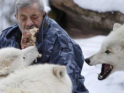 79-летний немец Вернер Фройнд является вожаком стаи, которая насчитывает 29 волков. На протяжении последних 40 лет бывший десантник живет среди зверей в своем заповеднике в городе Мерциг.