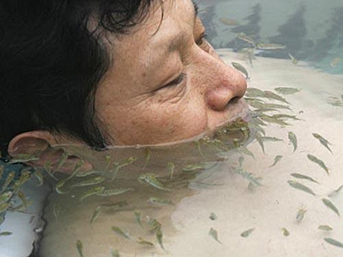 Доктора с жабрами представлены на земле в двух разновидностях - Garra rufa и Cyprinion macrostomus. Ещё их частенько называют  «грызущими рыбами»  ( nibble fish ) или «рыбными докторами» ( doctorfishen ).