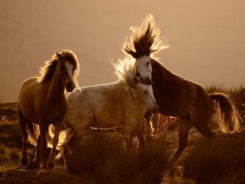 Лучшие июльские фотографии от National Geographic
