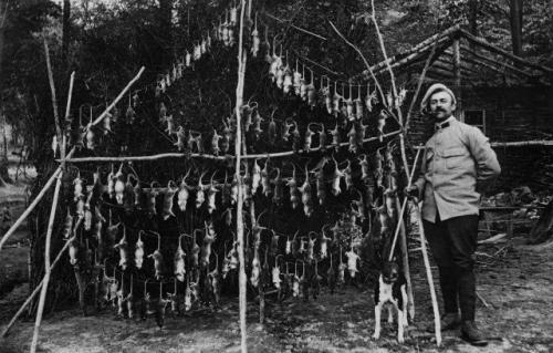 Крысы, убитые в окопах. Франция, 1916 г.