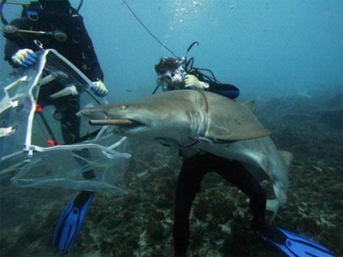 акула ест лодку
