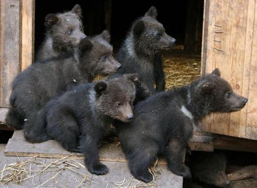 http://www.topnews.ru/upload/photo/4926f325/fdd96.jpg