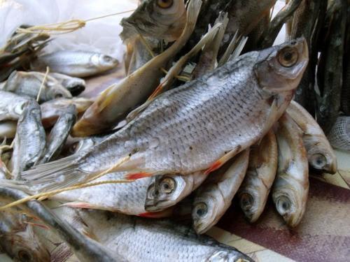 Сушеная рыба Древние египтяне относились к еде сдержанно, это видно по подтянутым фигурам на расписных стенах. Мясо (тушёное, жареное) ели в основном представители знати, а простые люди употребляли хлеб, овощи и рыбу. Рыба считалась продуктом нечистым, и жрецы, военачальник, фараоны ей открыто брезговали. Народ же просто сушил рыбу на солнце, обтирая её солью.