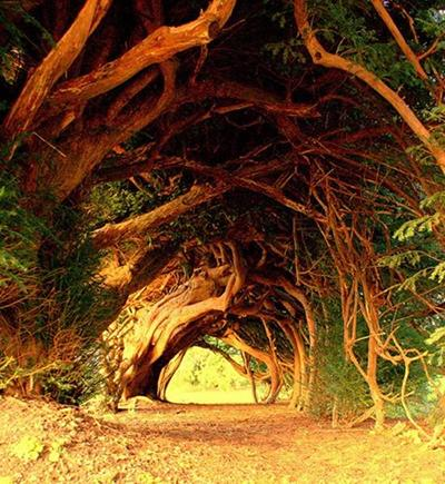 Топ-10 самых красивых в мире тоннелей из деревьев