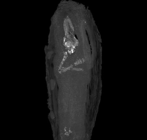 """Мумифицированный зародыш Самая юная мумия была обнаружена британскими археологами в 1907 году. Нерожденный человеческий зародыш был положен в миниатюрный гроб. Его возраст, по прикидкам ученых, составлял 16-18 недель. Предполагается, что он погиб в результате выкидыша у матери. """"Тщательность, с которой был похоронен зародыш, демонстрирует великое уважение егшиптян к таинству человеческой жизни"""", - говорит Джули Доусон, заведующая хранением в британском музее Фитцуильяма."""