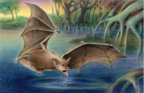 Шесть доисторических видов летучих мышей В 2008 году во время раскопок в окрестностях Каира, изучая окаменевшие останки, археологи обнаружили скелеты шести доисторических видов летучих мышей. Самым поразительным оказалось то, что все они были не вымершими, а родственными ныне существующим видам. Это заставило ученых серьезно задуматься над происхождением современных летучих мышей: раньше считалось, что они впервые появились в Европе, но теперь оказалось, что, возможно, они родом из Северной Африки.