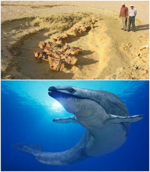 """Останки кита возрастом 40 миллионов лет В 1902 году в пустынной местности Вади-аль-Хитан археологи обнаружили хорошо сохранившиеся останки древнего предка кита - базилозавра, жившего здесь 40 миллионов лет назад. Животное либо было беременным, либо накануне смерти съело собрата, поскольку у него в животе располагался еще один базилозавр. С тех пор в той же местности обнаружили еще 9 скелетов базилозавров, в том числе - единственный полный нетронутый скелет из известных на сегодня ученым. Эту местность давно прозвали """"долиной китов"""", что звучит крайне загадочно, учитывая, что сегодня это - голая пустыня."""