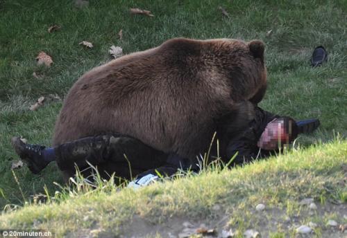 Умерла ли медведица после питарды