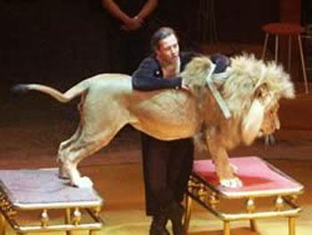 Львы и гамадрилы выступят на арене нижегородского цирка.