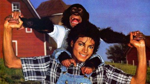 2. Майкл Джексон  – шимпанзеВозможно, самым избалованным животным в этом списке является шимпанзе Майкла Джексона по имени Бабблс. Он пристрастился к красивой жизни после того, как его спасли из научно-исследовательской лаборатории. Этот шимпанзе, который очень часто путешествовал с Майклом Джексоном по миру в ходе турне, располагал собственной колыбелью, пользовался туалетом звезды и даже попил чаю с мэром Осаки.