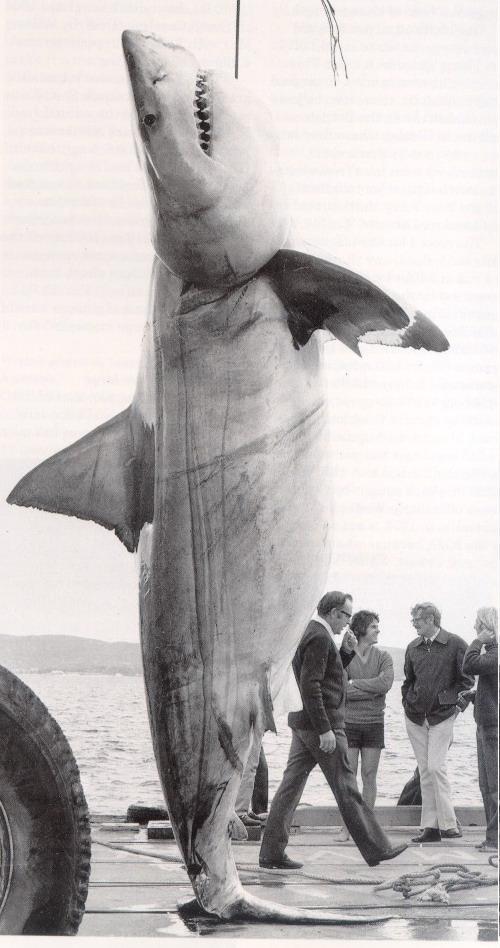 Хотя, когда речь идет об акулах, трудно удержаться, от эпитета...