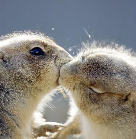 Любовники целуются