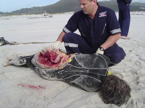 1 фото.  Акула сцуко опасная.