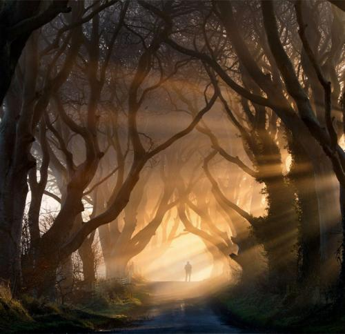 Буковая аллея Dark Hedges, Северная Ирландия