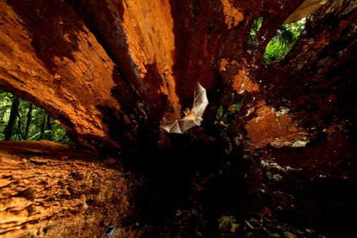 Объявлены лучшие фотографы дикой природы
