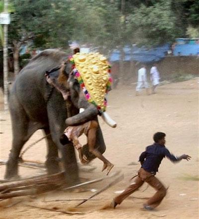 одежда как слоны нападают на людей стирать его ухаживать