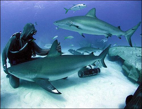 """...шаркмен """" -  """"человек-акула """", и своей жизнью среди морских хищников он..."""
