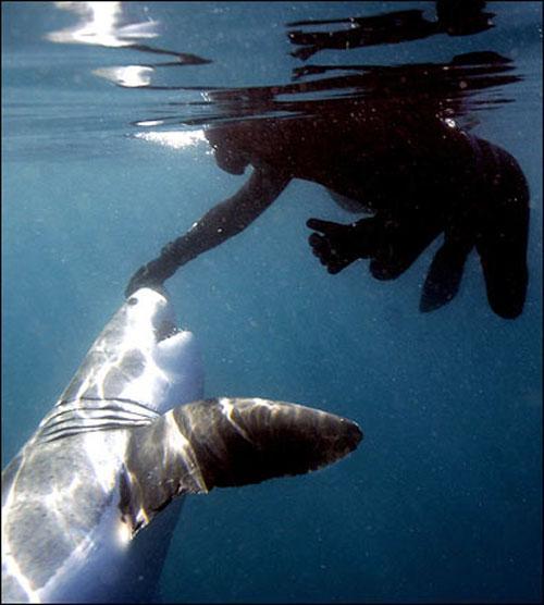 """Его называют  """"шаркмен """" -  """"человек-акула """", и своей жизнью среди морских"""