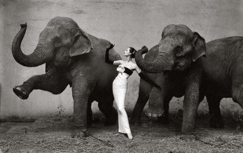 Ричард Аведон — «Довима со слонами», 1955Ричард Аведон — один из самых влиятельных фэшн-фотографов XX века. На знаменитом снимке популярная модель того времени Довима в платье от Dior. Снимок был продан  в 2011 году.Цена — $1 151 976.