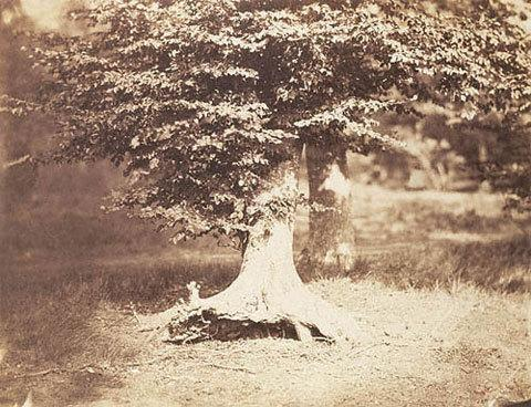 """Густав Ле Грей - """"Дерево"""", 1855В течение 1850 года Густав Ле Грей совершал несколько поездок в лес Фонтенбло, старый королевский охотничий заповедник, который был превращен в общественный парк - популярное в то время место отдыха в Париже. На этой фотографии изображено одно из тех буковых деревьев, что росли в том парке.Цена — $ 513 150."""
