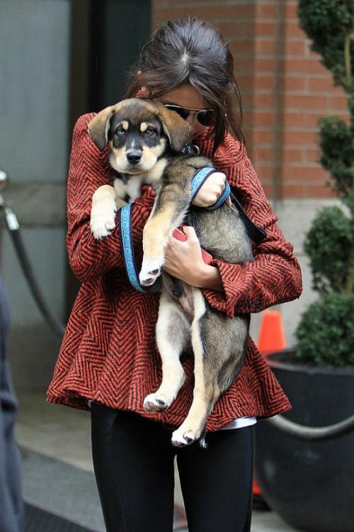 Селена Гомес (Selena Gomez): «У меня дома живут шесть псов, и все они - приемыши. Двоих мы нашли на автостоянке, а затем еще одного - у соседа во дворе, который переехал жить в другое место, что очень жестоко с его стороны...