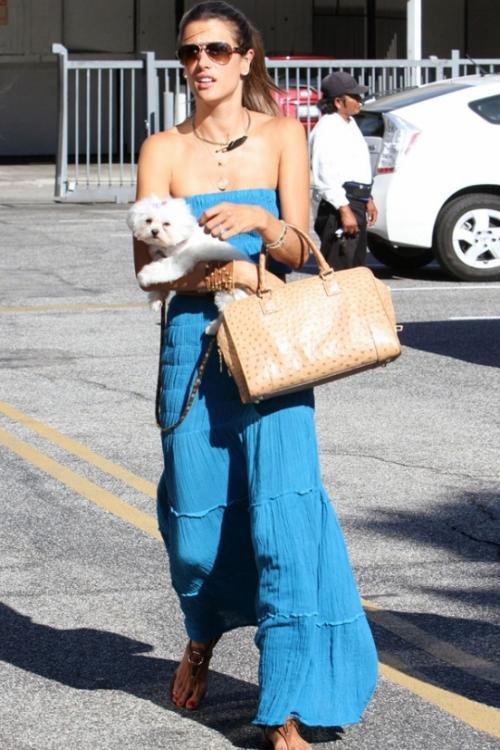 Алессандра Амбросио (Alessandra Ambrosio): «Однажды мы пошли в зоопарк, и Ане (прим. - дочь супермодели) очень понравился тюлень. И она начала канючить: «Мамочка, ну купи мне такого, только маленького!». Мы покинули зоопарк без тюленя, но на следующий день приобрели пушистую малютку Лолу».