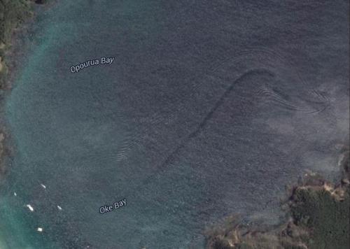 Морской монстр у побережья Новой Зеландии