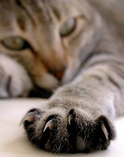 Коты-Воители Хвостатые Легенды.