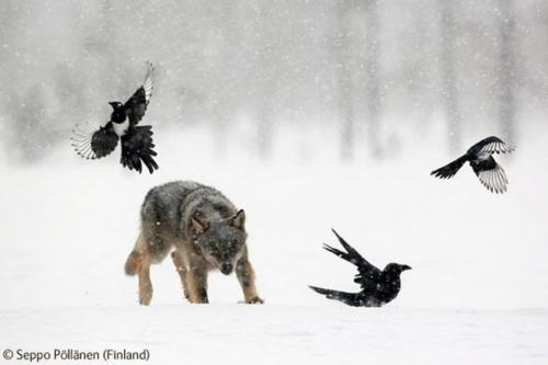 животни и сняг