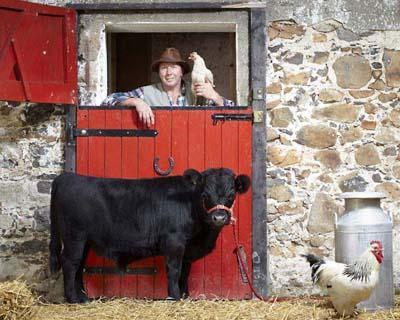 Самый низкорослый бычок Бычку по кличке Арчи - 16 месяцев. Он живет в Северной Ирландии, и его рост составляет всего 76,2 см в холке.