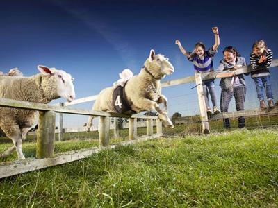 Самая быстрая овца Самая быстрая на планете овца живет в английском графстве Бакингемшир. Она постоянно участвует в бегах и выиграла 165 из 179 забегов.