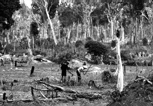 Вьетнамцам приходилось неделями сидеть в укрытиях из-за американских бомбежек. Когда они выходили наружу, деревья вокруг были уже без листьев.