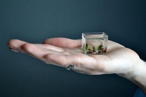 Этот самый маленький аквариум сделал