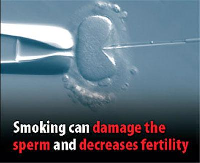 "���� �������� ����� ����� ������ � ������� ��� ���������� ("" The smoking can damage the sperm and decreases fertility "")�"