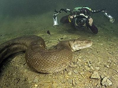 Дайвер сделал потрясающие фото анаконды под водой