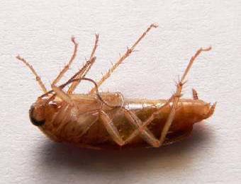 Поговорим о тараканах!