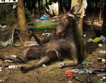 В Швеции пьяный лось залез на яблоню