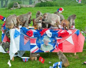 Английские макаки отпраздновали юбией королевы