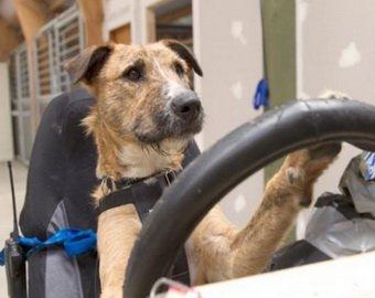 как здать экзамен по вождению: