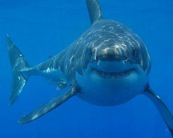 Рыбак с берега поймал акулу весом 365 килограммов