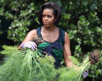 Лиса разорила огород Мишель Обамы