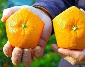 В Японии появились пятиугольные апельсины
