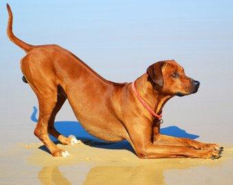 """Собака спасла """"тонущего"""" хозяина"""