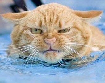 Кот, сбросивший собаку в бассейн, стал звездой интернета