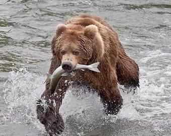Гей видео медведь