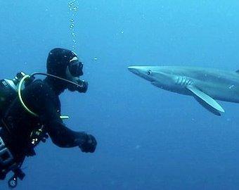 Африканский «поцелуй» акулы и дайвера попал на видео